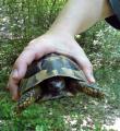 Še ena želvica, tokrat na poti do slapa 2